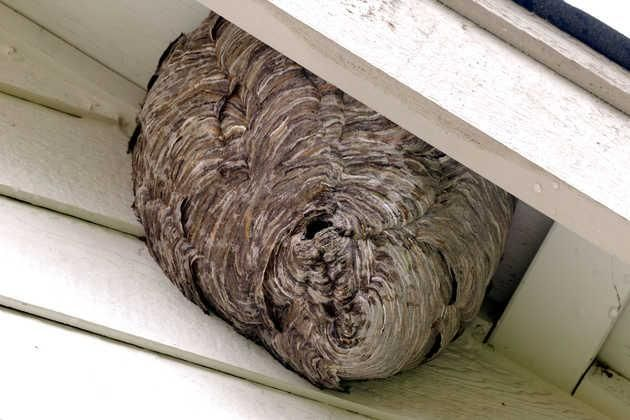 pest control springfield ma belchertownpestcontrolservices com